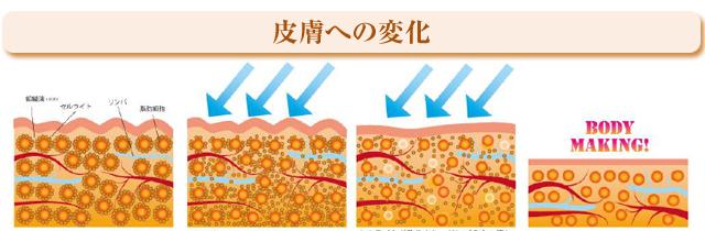 皮膚への変化